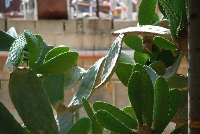 kaktusgs