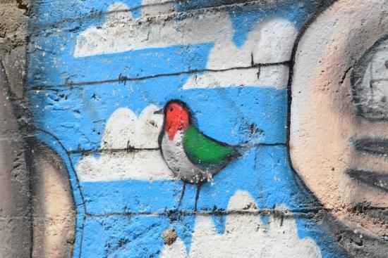 BirdWall